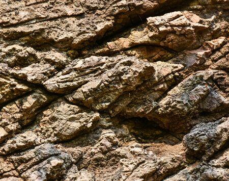 firmness: Dark brown solid rock texture with crack lines