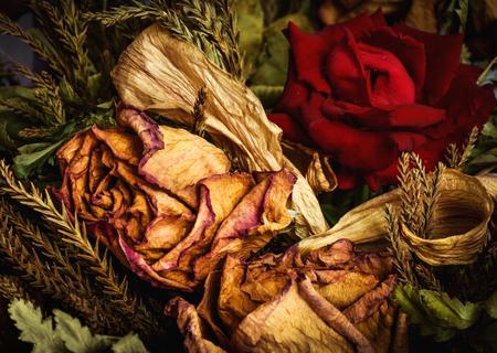 Contraste de belle rose rouge fraîche placée dans un bouquet de roses séchées. La couleur vibrante de rose fraîche contribue à ramener le bonheur et la romance du passé et des souvenirs. Banque d'images - 83736193