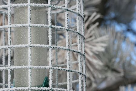 ponderosa pine winter: Frost Crystals on Bird Feeder