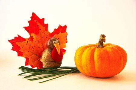 thanksgiving greeting: Tiny Turkey and Mini Pumpkin