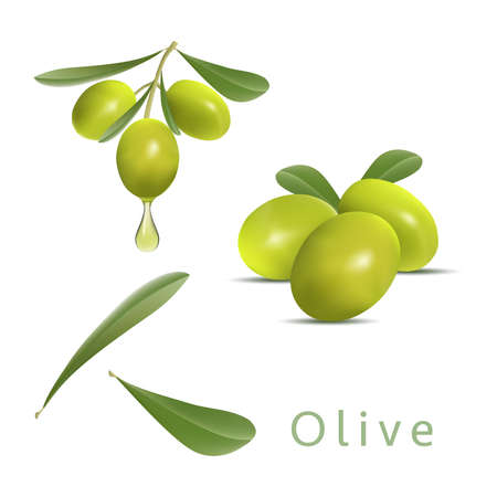 design for olive oil, natural cosmetics, health care products. vector illustration of green olives branch isolated on white background. watercolor illustration of green olives on branch.