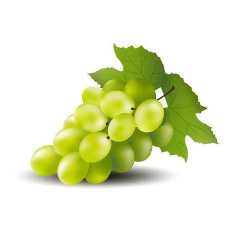 Green grape on a white background vector design. Illusztráció