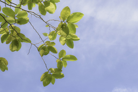 absract art: closeup  branches of tree on sky and cloud background