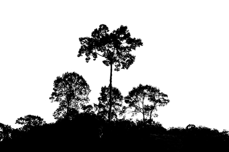 sihouette: Sihouette of trees  at nature landscape