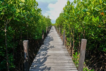 Nature trails and mangrove forests in seaboard Thailand
