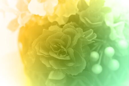 closeup image of roses in soft style and blurred