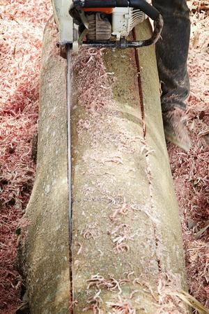 Professionelle Logger Standard-Bild