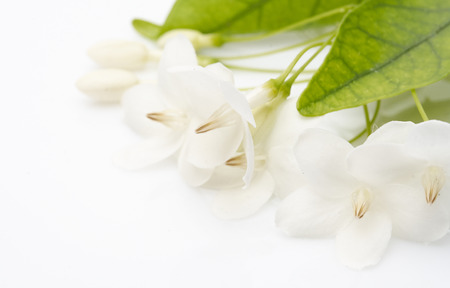 White flowers that look as natural as putting on a white background photo