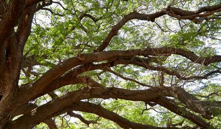 large tree: Under big green tree, garden
