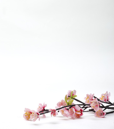 Pink Cherry blossom, sakura flowers isolated on white background, fake, Flowers made from fabric