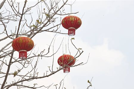 Chinese lantern decoration on the tree, Chinese means good luck