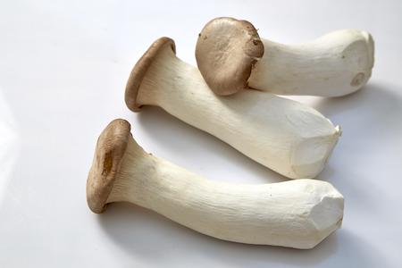 jhy: King oyster mushroom Pleurotus eryngii on white background