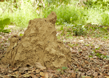 Large termite mound in the background of the residential compound