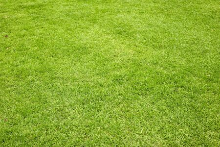 Beautiful green grass texture from golf course Stock Photo