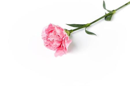 mooie roze anjerbloem die op witte achtergrond wordt geïsoleerd
