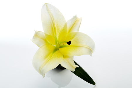 White lily flower closeup isolated on white Imagens