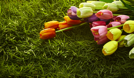Colorful tulips in a field. Spring - poster with free text space, Flat lay, top view. Valentines background. Horizontal, wide screen format, toned Stock Photo