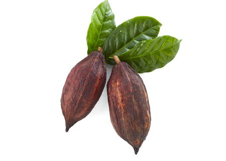 Cabosses de cacao avec feuille de cacao sur fond blanc