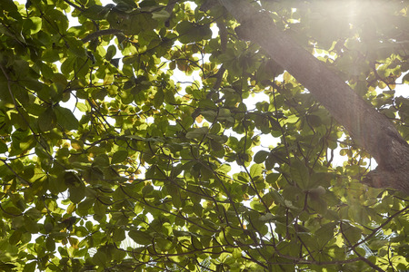 morning light and fog in the garden with green leaf background, Summer and Spring Concepts