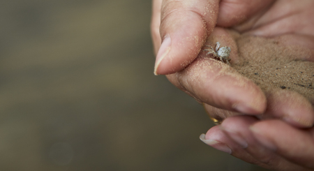 Small crab in the hand concept of  Earth Day , Coastal ecosystems