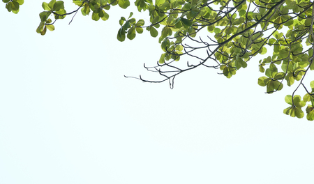 Green leaf spring branch in front of  sky Stock Photo
