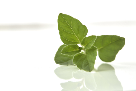 Oregano or marjoram leaves isolated on white background