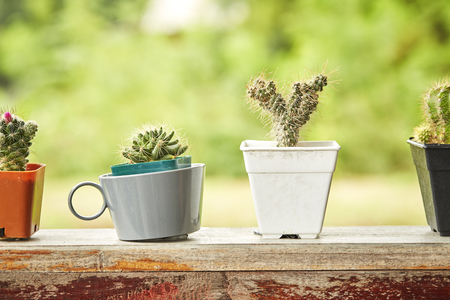 Cactus in white plastic pot on mable table at the in front of house with blurred garden view textured background