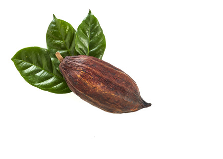 Cocoa pod with Cocoa leaf on a white background Standard-Bild - 109391177