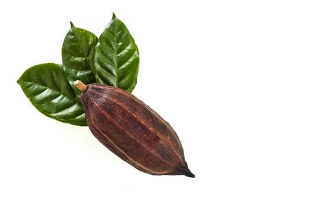 Cocoa pod with Cocoa leaf on a white background Standard-Bild - 109847347
