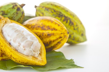 Fresh Cocoa pod Cocoa leaf and Cocoa Fruits on white background, Food industry concept
