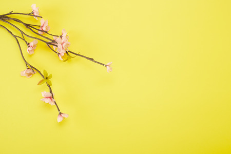 Minimal Pink Plum Flowers Blossom on yellow background, Empty space for design