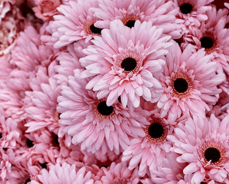 Pink flowers use for background texture Imagens - 118558412