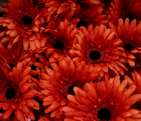 red flowers use for background texture Imagens - 118558414