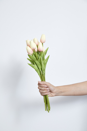 Womans hand holding tulips bouquet of tulips on white  close-up. Imagens