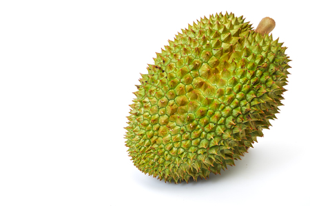 Green tropical fruit durian on white background. Exotic fruit durian studio photo. Thailand delicatessen. Spiky peel and sweet flesh of tropical fruit. Thai sweet food 写真素材