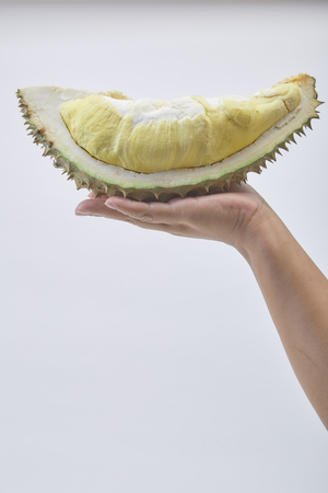 Hand holding fresh cut Durian which is king of fruit from Thailand isolated on white background with space for text.