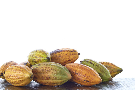 Fresh cacao pods on the table on white  with the morning sun Imagens