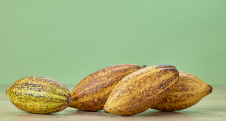 Cocoa pod on wooden table green