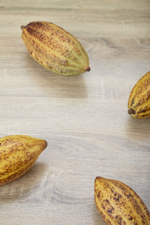 Fresh cocoa pods fruit with cocoa pods on the table