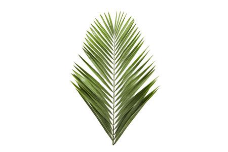 groene palmbladtakken op witte achtergrond. plat lag, bovenaanzicht