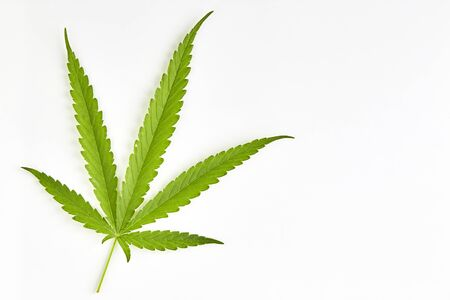 Cannabis leaf, marijuana isolated on white background, top view copy space for text