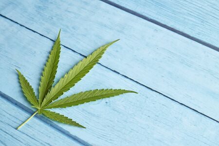 Cannabis leaf, marijuana on bright blue wood table  top view copy space for text