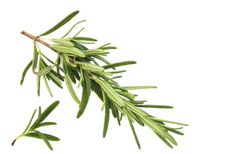 fresh raw rosemary on white background, top view 版權商用圖片
