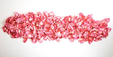 Petals of pink roses on white background Valentine's day background. Flat lay, top view, copy space for text