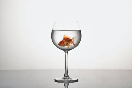 Goldfish in glass isolated on white, copy space for text Stockfoto
