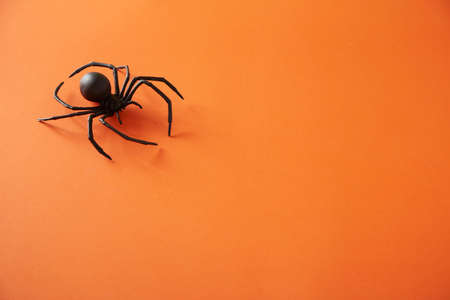 Flat lay Halloween background with spider on orange background trendy holiday concept.
