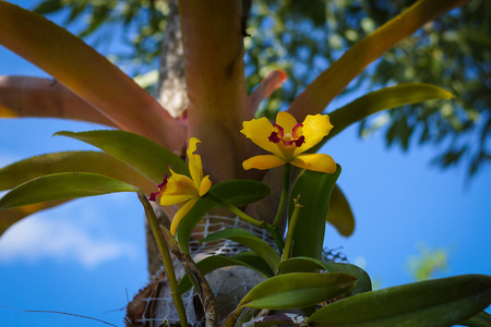 yellow orchid: Yellow orchid on the tree.