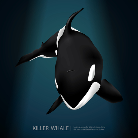 Killer Whale Under The Sea Vector Illustration Ilustração