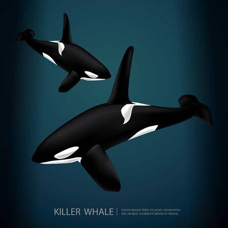 Killer Whale Under The Sea Vector Illustration Illustration