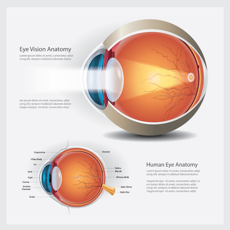 Ilustración de Vector de anatomía de visión de ojo humano